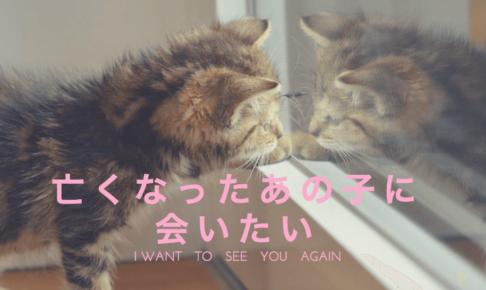 亡くなった 猫 会いたい