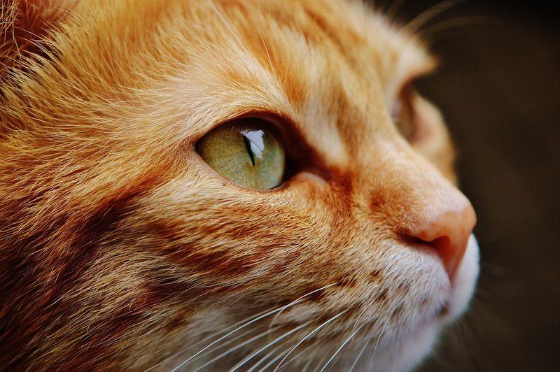 「成仏」の意味とは?人や動物は死んだら成仏できる?