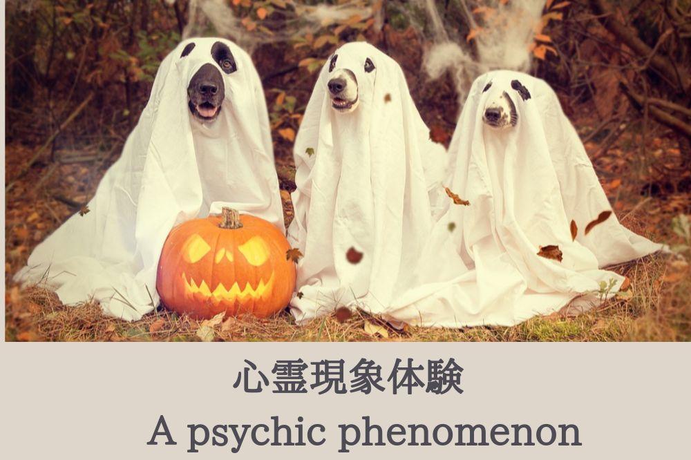 『怖い』もし心霊現象を体験してしまったら…?【2020年版】