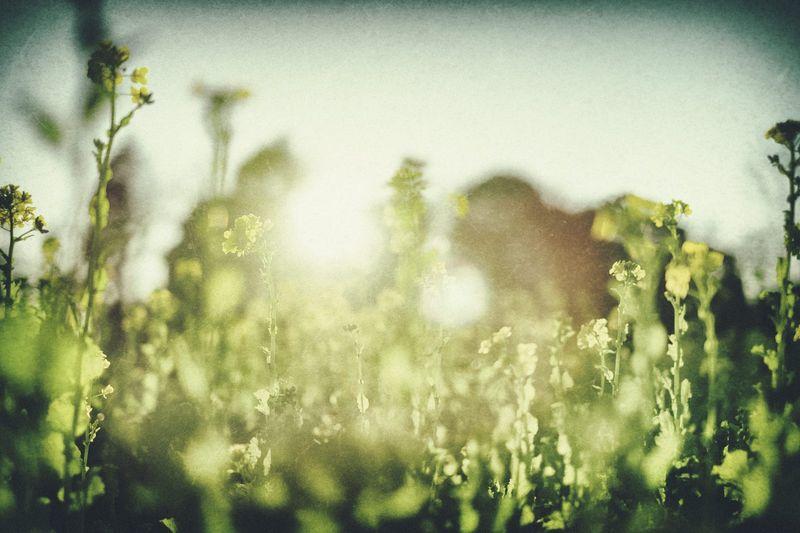 【霊能師が教える】突然来る線香の匂いの正体…原因とその理由とは?