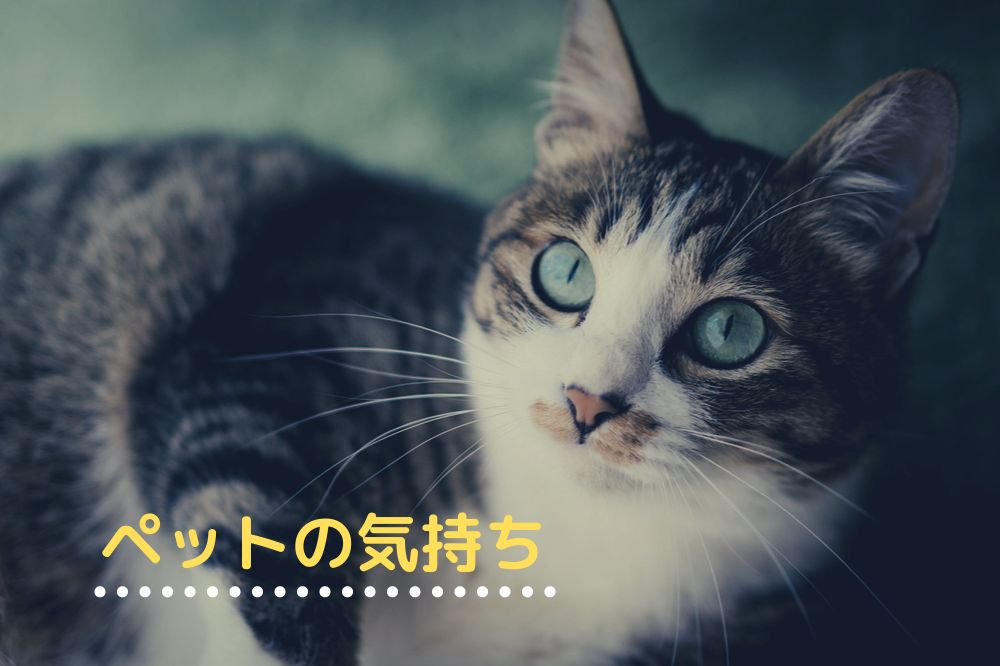 ペットの気持ちがわかる方法【動物の感情を知るために大切なこと】