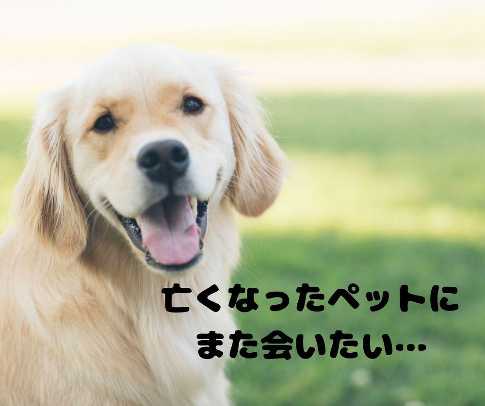 【逢いたい】ペットの魂はどこへ行く?死後の世界って?