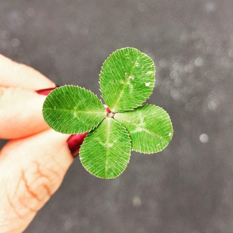 「幸運の前兆」って本当に存在する?幸せの前触れを見分ける方法