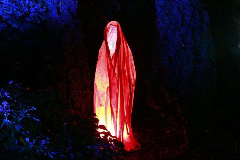 ちょっと怖い心霊現象【富士の樹海】で実際に起こった不思議な話
